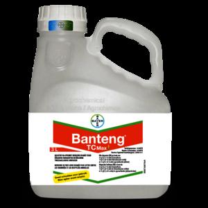 BANTENG