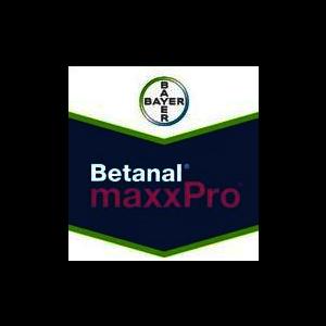 BMAXXP
