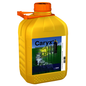 CARYX